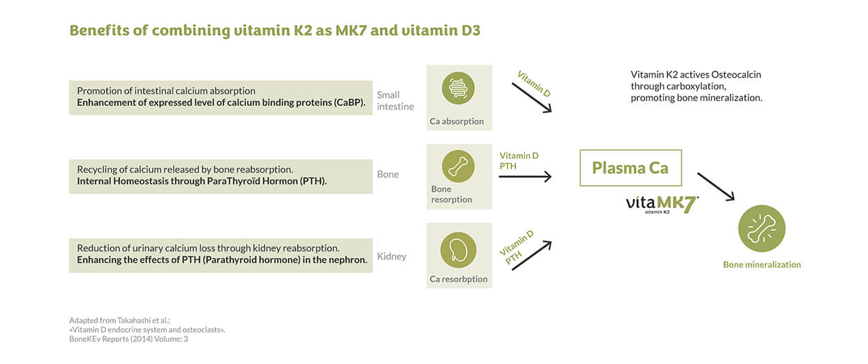 How do vitamins D3 and K2 work together? - graphic