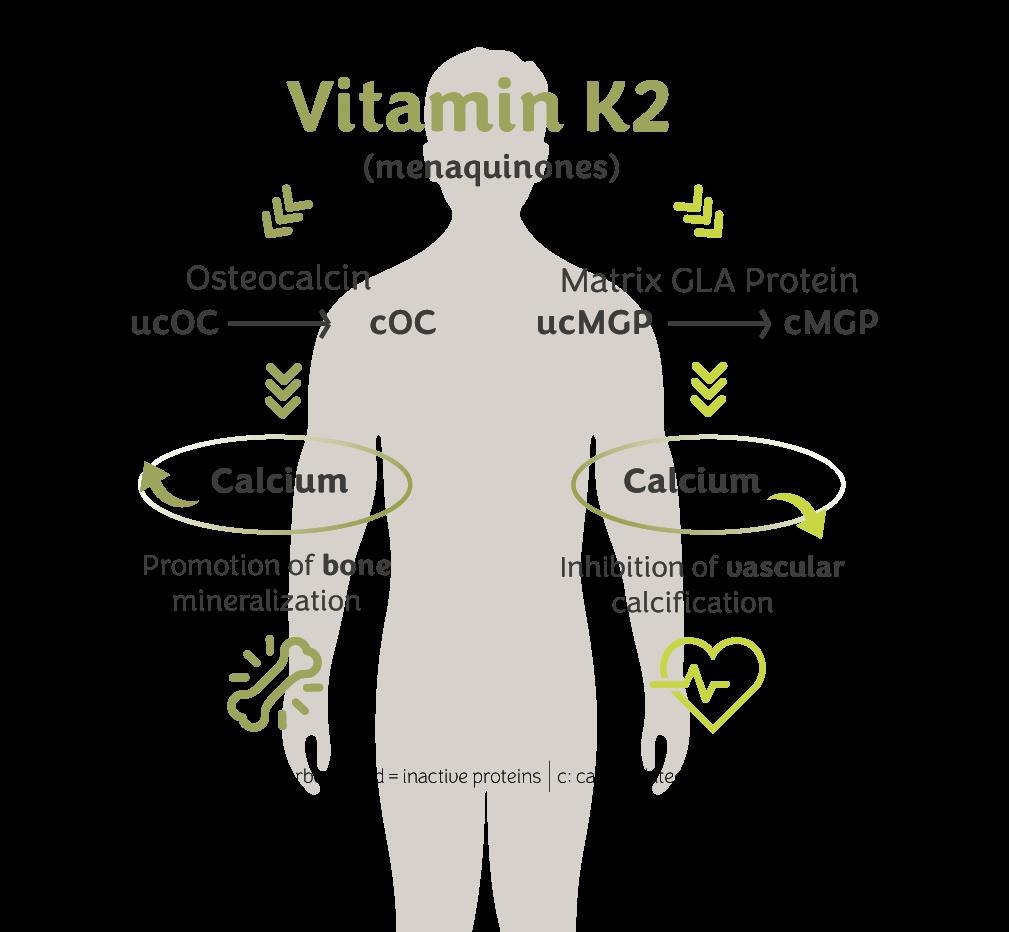 How vitamin K2 works? - vitaMK7